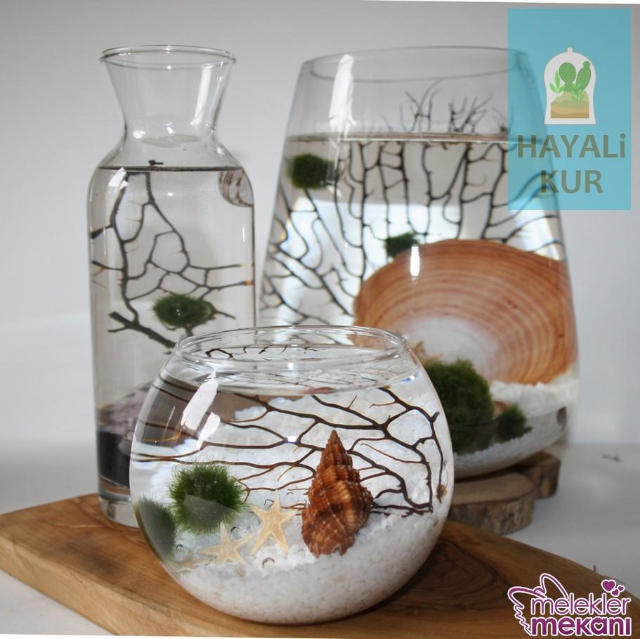 Şık teraryum fanusunuzda deniz boncuklarınızdan faydalanabileceğiniz dekoratiflik elde edebileceksiniz.