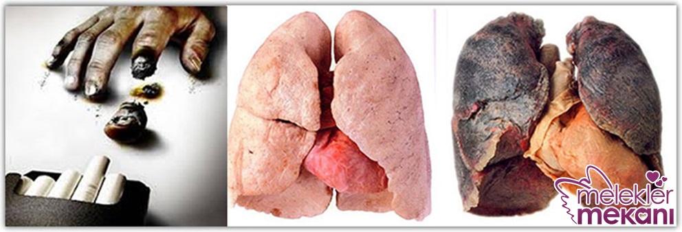akciğeri temzileme çayı.jpg