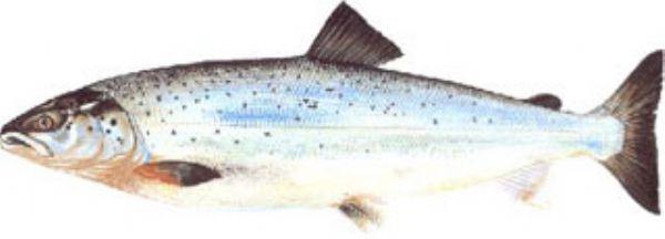 balık.jpg
