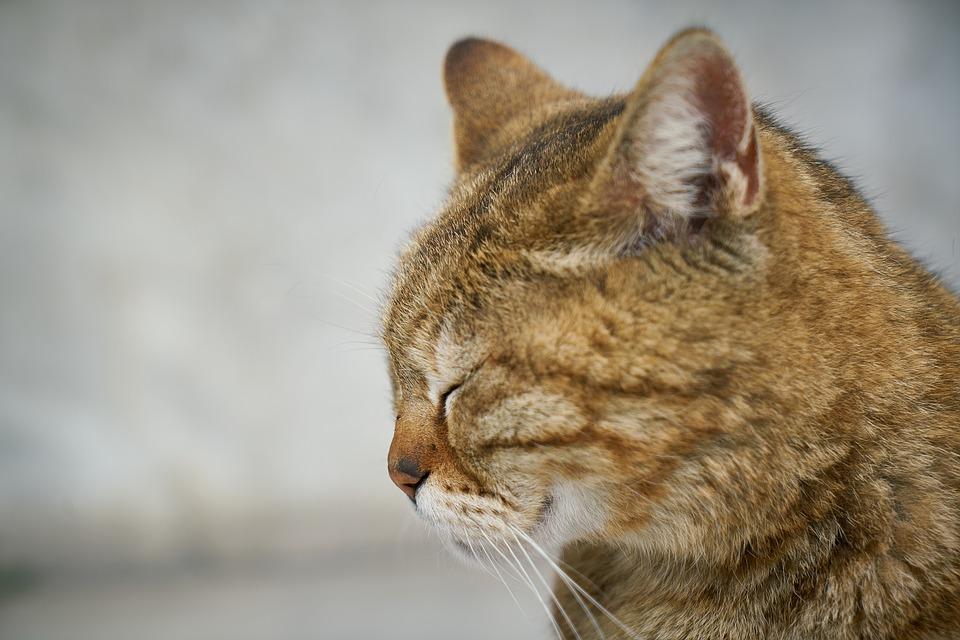 hayvan-portresi-jpg.78394,Hayvan Portresi Çekmenin 8 Püf Noktası – Fotoğraf Çekim Teknikleri