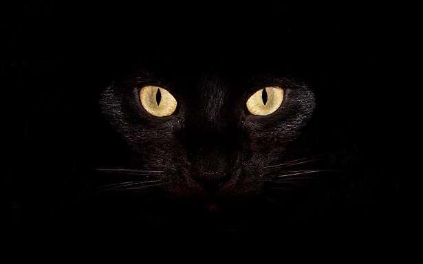 Kara Kedi.jpg