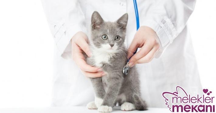kedi hastalıkları.jpg