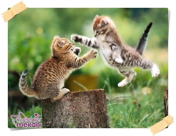 kedi resimleri (13).jpg