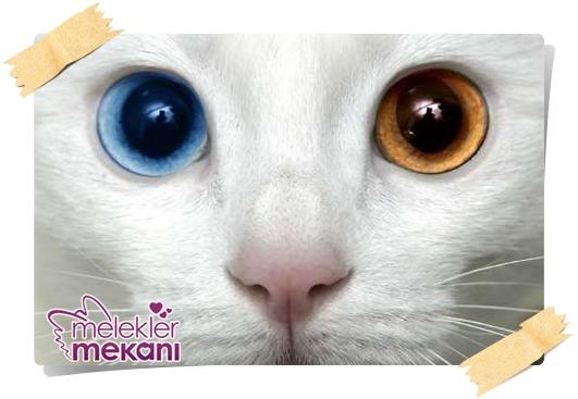 kedi resimleri (16).jpg