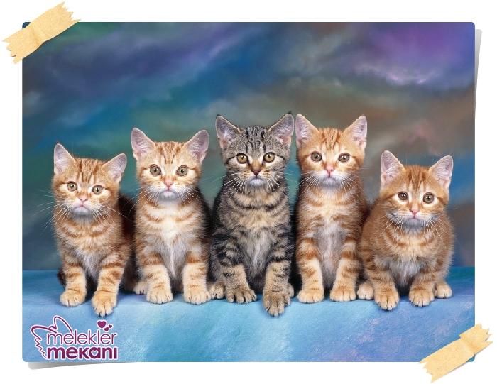 kedi resimleri (17).jpg