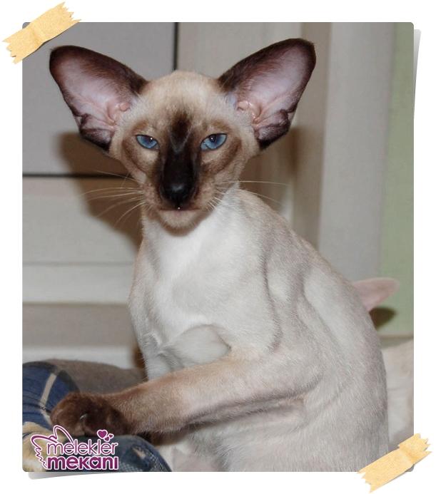 kedi resimleri (18).jpg