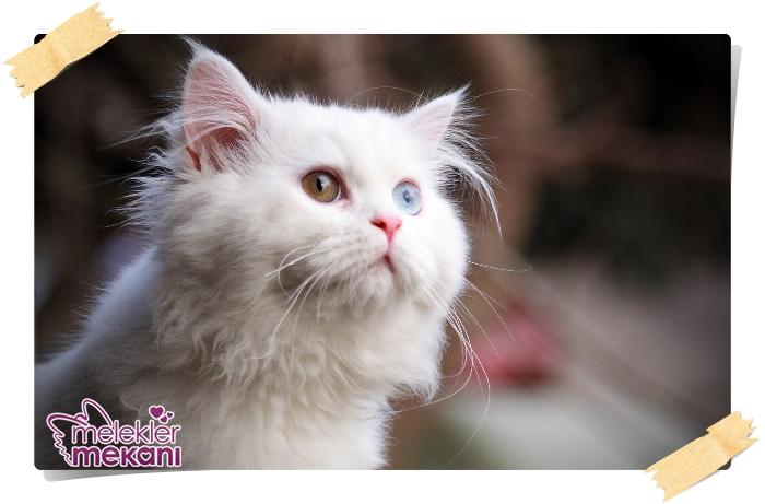 kedi resimleri (23).jpg