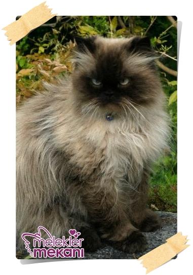 kedi resimleri (5).jpg