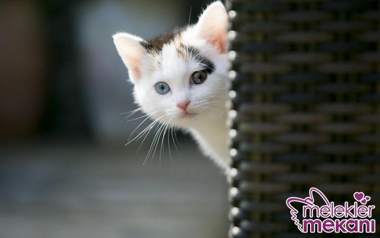 kedilerde tüy dökülmesine ne iyi gelir.jpg