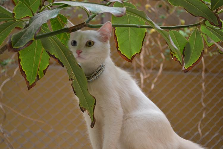 kedilerin-yaslari-jpg.62870 Kediler kaç yıl yaşar? Melekler Mekanı Forum