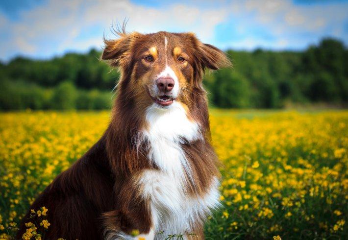 köpek resimleri 2.jpg
