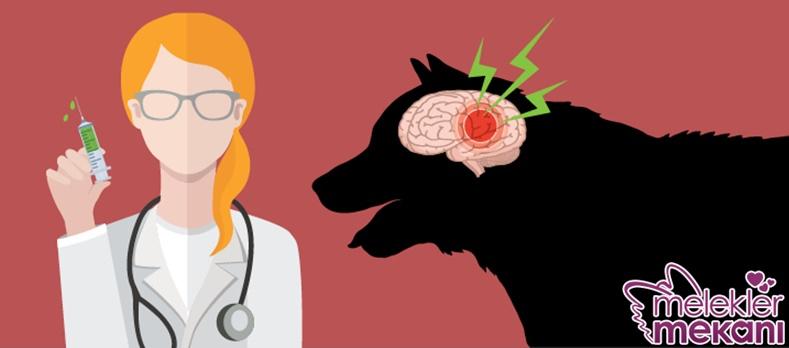 köpeklerde beyin hasarı.jpg