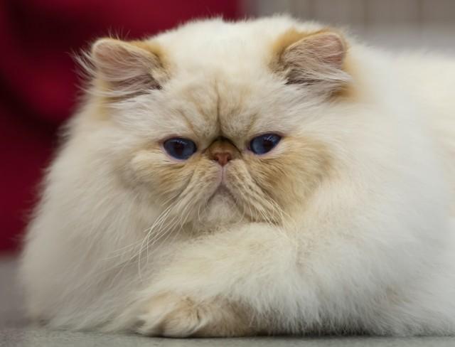yabancı erkek kedi isimleri.jpg