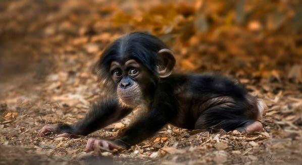 yavru maymun 4.jpg