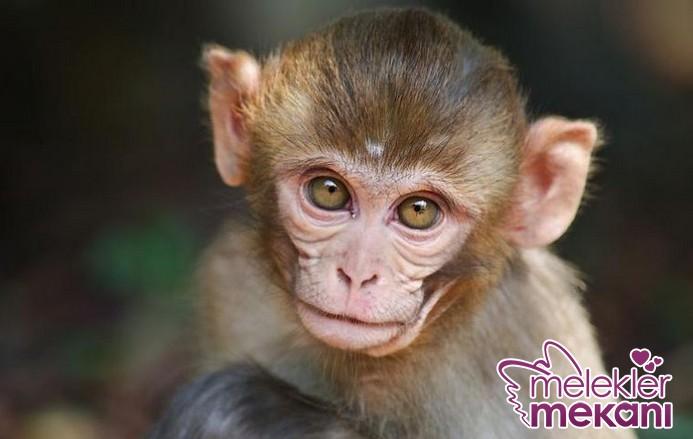 yavru-maymun.JPG